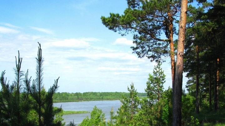 Кусок Заельцовского бора на берегу Оби выставили на продажу за 145 миллионов