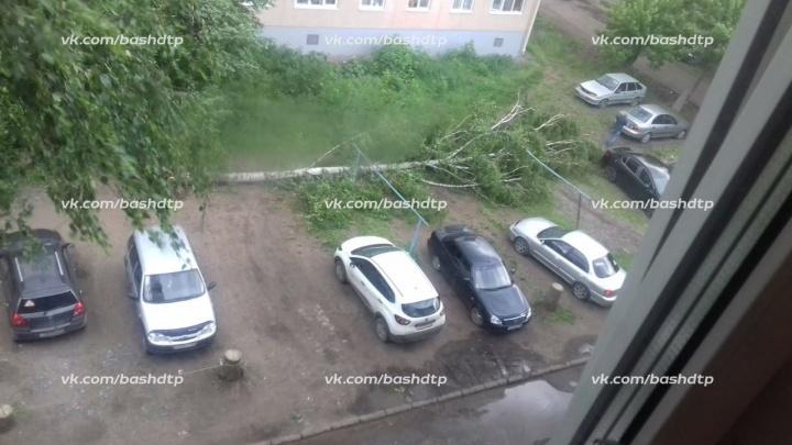 В Уфе ураганный ветер повалил деревья: под обломками застрял Nissan