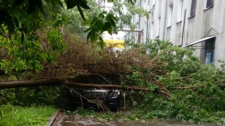 Дерево упало на «Мерседес» после ливня в Дзержинском районе