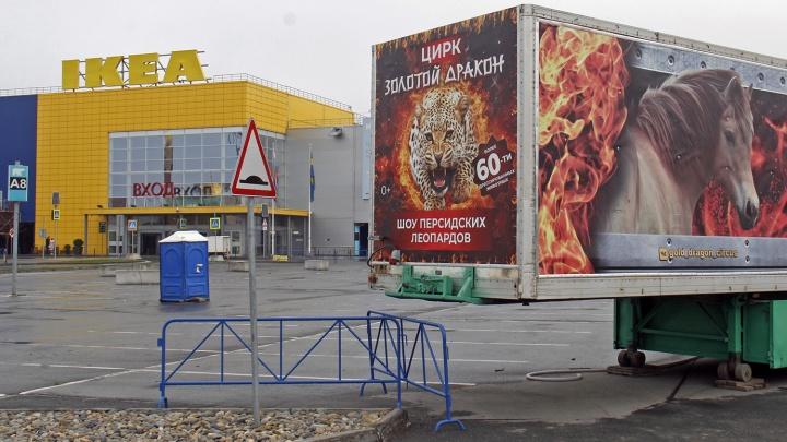 «Они у нас в печёнках сидят»: цирк требует с зоозащитницы 100 тысяч — дело может стать прецедентным