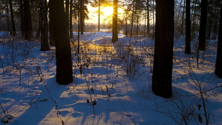 Метели в Новосибирске прекратятся после резкого похолодания