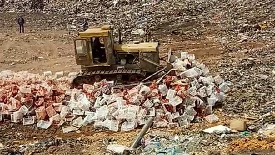 Казнь красных: в Самарской области под бульдозер пустили 18 тонн свежих томатов
