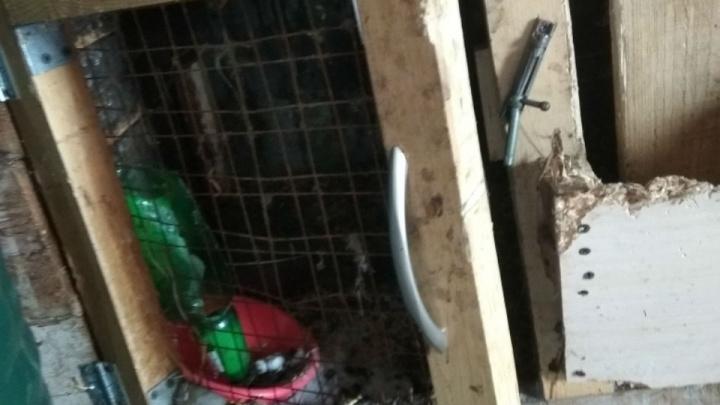 «Осторожно, чупакабра!»: в Башкирии неизвестный хищник погубил десяток кроликов