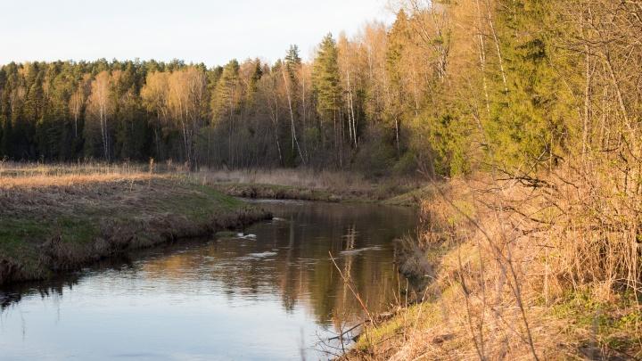 В Ярославской области мужчина забил копьём благородного оленя