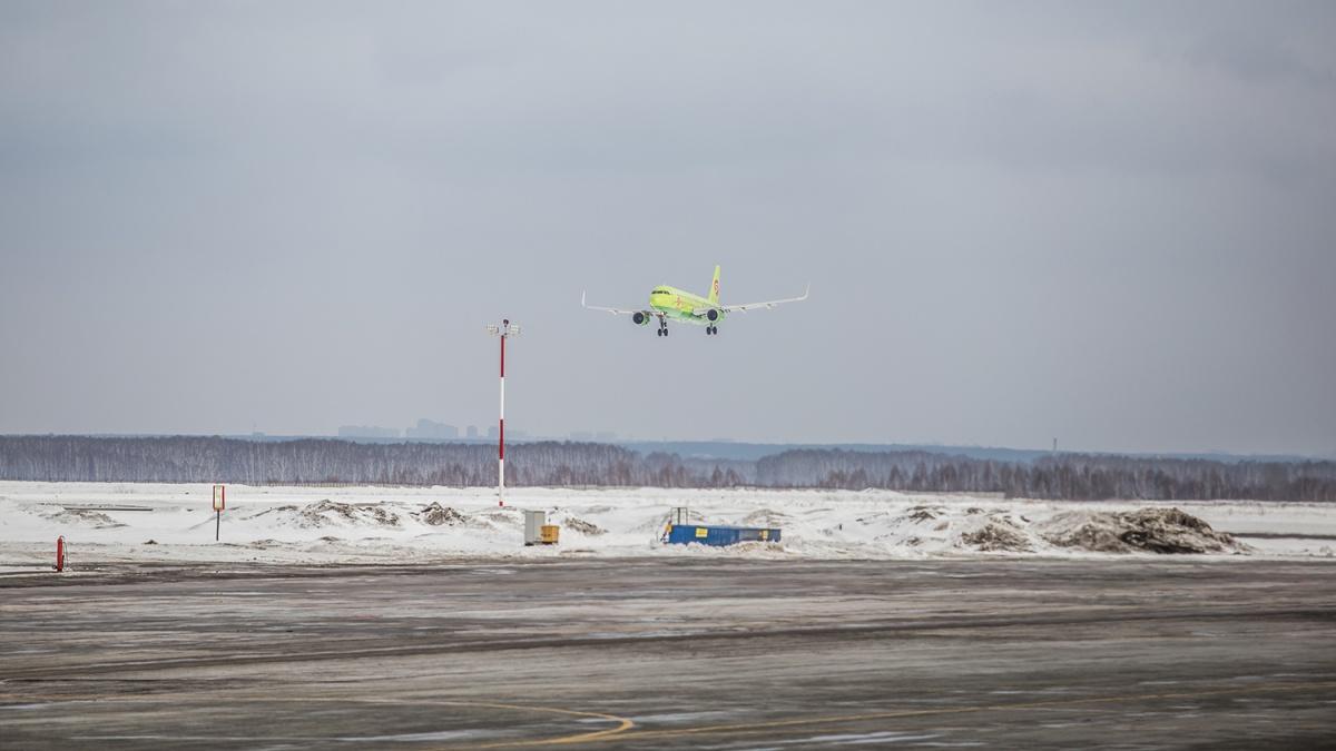 Экспертиза показала, что птицы со свалки возле Толмачёво создают опасность для самолётов