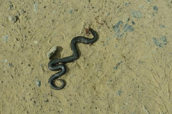 Змеи первые не нападают на человека. Они могут укусить лишь тогда, когда чувствуют опасность