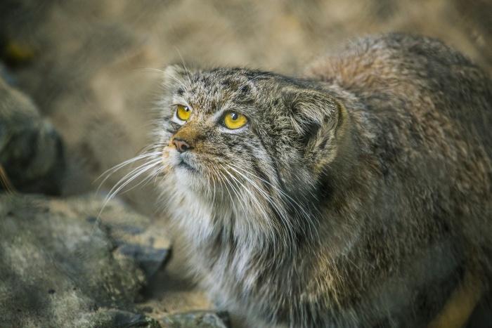 Посетители подходят слишком близко к диким животных и пытаются накормить их смертельно опасной для них едой