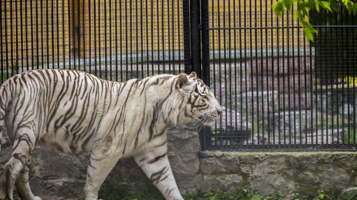 Время для долгих прогулок: Новосибирский зоопарк меняет график работы