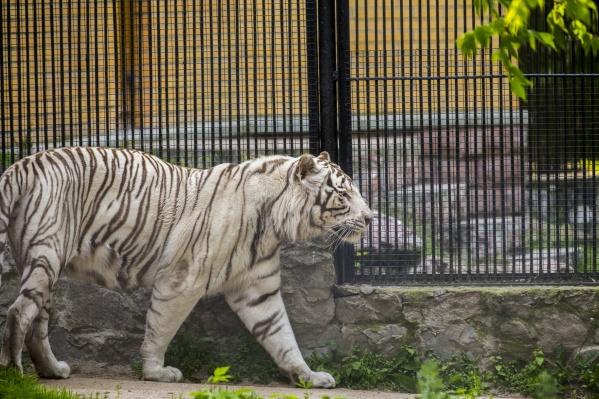 Режим работы зоопарка меняется несколько раз в год