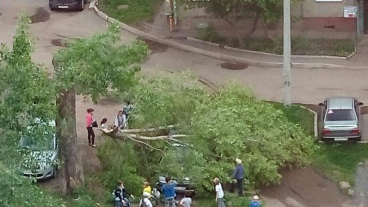 В Уфе дерево упало на припаркованный автомобиль