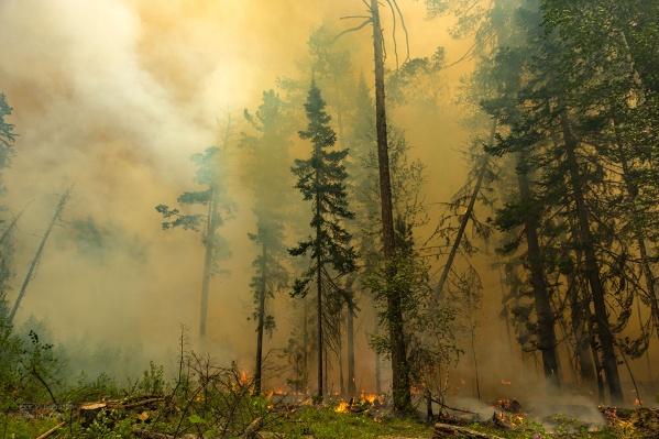 Нейросеть оценивает, как изменяется площадь лесов с высоты спутниковых снимков