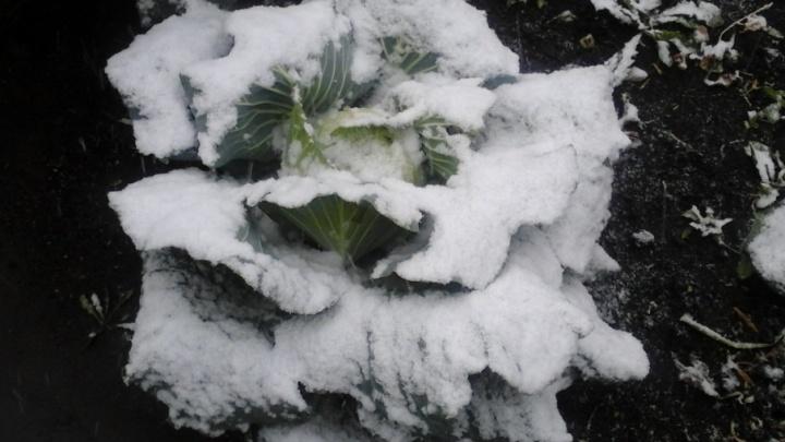 Коротко о погоде: синоптики прогнозируют установление снежного покрова на территории Курганской области