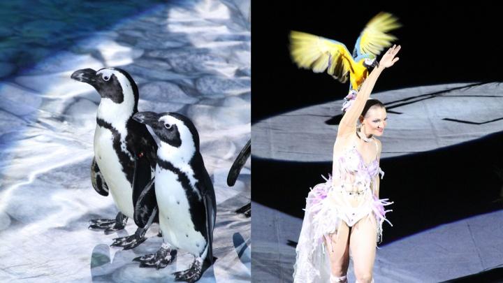 Пингвины на арене: в Самару привезут цирковое шоу «Ласта-рика»