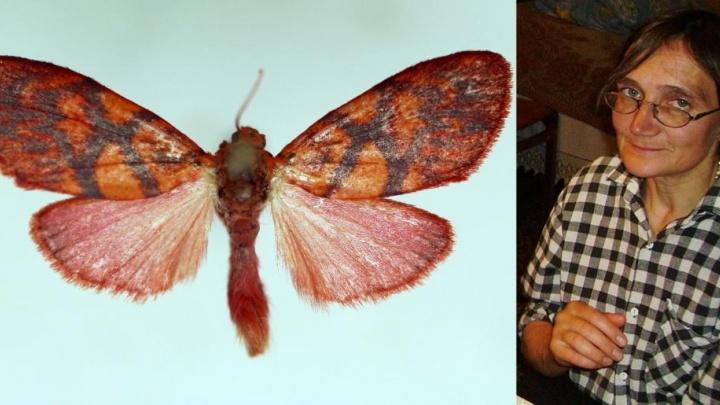 Медведица Подболоцкой: новый вид тихоокеанских бабочек назвали в честь архангельского зоолога