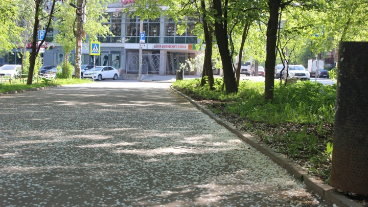 Фото дня: майский «снег» застелил тротуары города