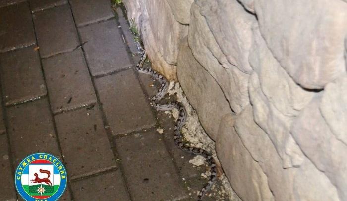 На уфимской улице обнаружили змею