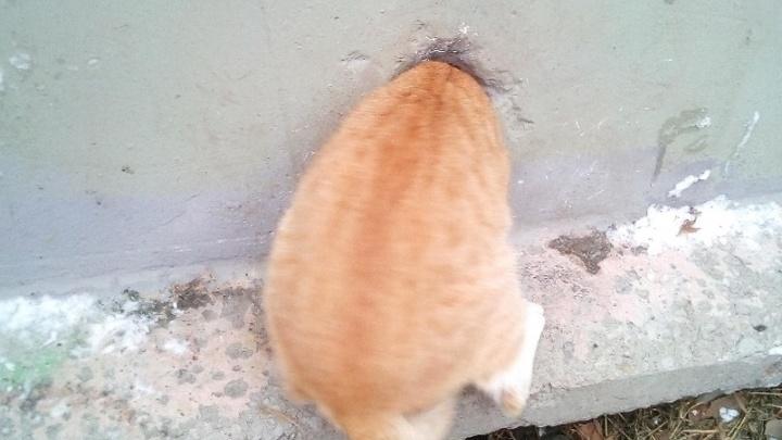 На ЖБИ спасли котика, который застрял в стене трансформаторной будки