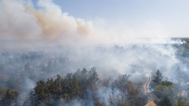 Сгубивший десятки гектаров соснового леса пожар в Волгограде сняли с высоты