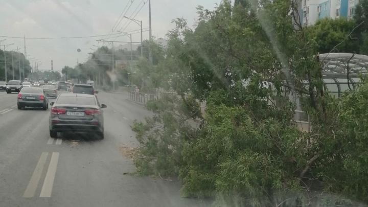 Сильный ветер повалил деревья в Самаре