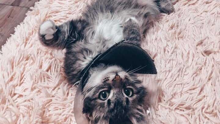 Возможно, попал под капот: в Уфе ветеринары спасли котенка без шкуры на хвосте