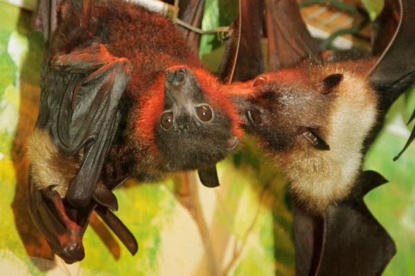 Первые дни жизни детеныш провел под опекой матери, поэтому его не было видно посетителям зоопарка