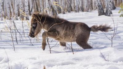 Он же ребёнок: фотопрогулка с месячным пони в конном клубе под Омском