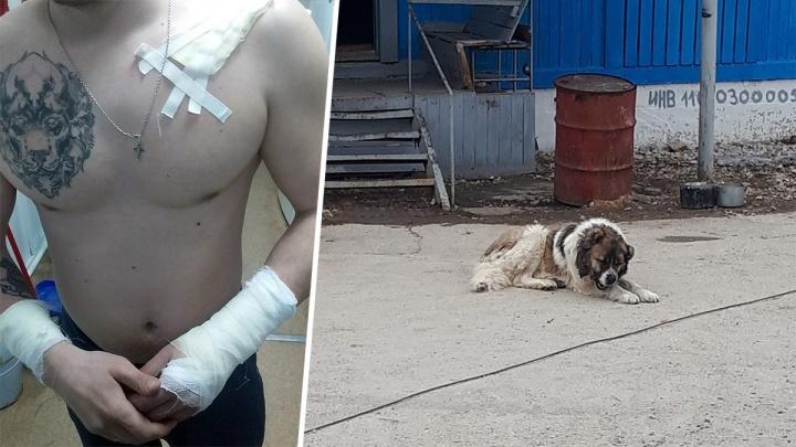 Прокуратура разобралась, кто виноват в нападении пса на спасателя в Новокуйбышевске
