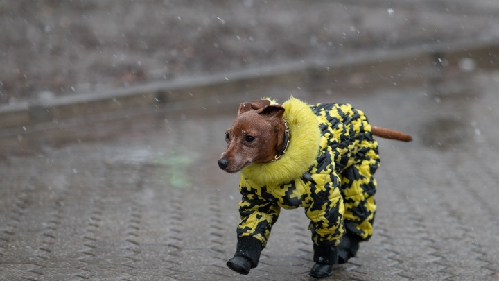 Как долго продержатся морозы?Прогноз погоды в Ростове на выходные