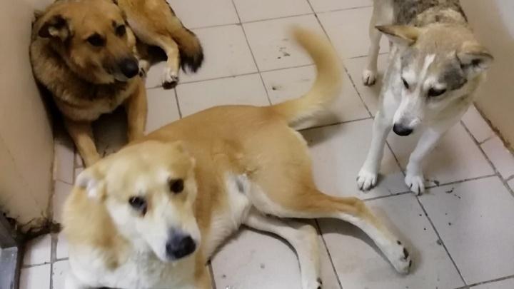 В Нытве живодеры убили трех бездомных собак. Полиция начала проверку