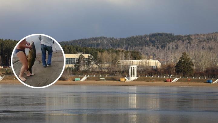 «Вот это ты обновил удочку!»: на Железногорском озере рыбаки выловили огромного карпа
