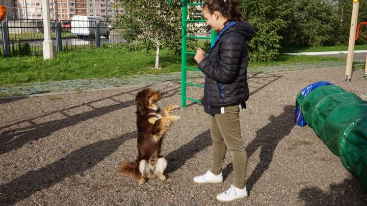 Школьников с Ястынской учат танцевать с собаками и дрессировать их