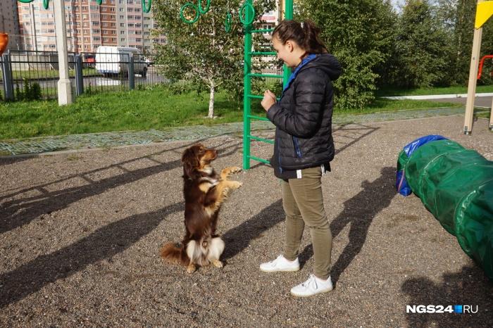 Большинство собак быстро выучило простейшие команды