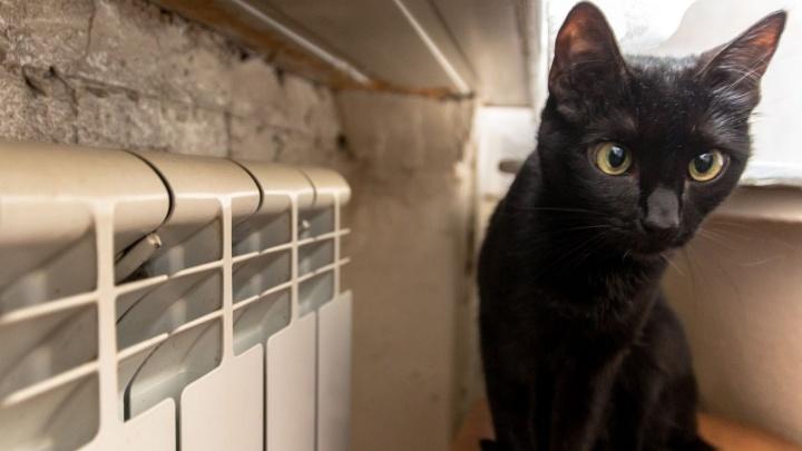 Неделю продержаться: отопление в домах дадут за семь дней