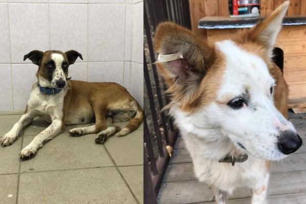 В клинике собираются стерилизовать 500 собак в месяц