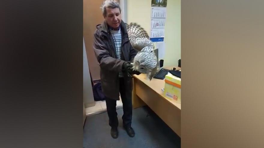 Письмо изХогвартса: в центре Челябинска на почту залетела сова