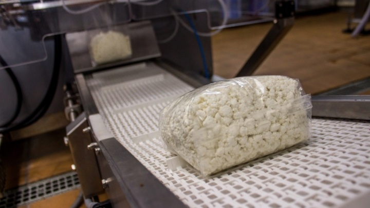 Съездили к бурёнкам: барабинский завод поделился редкими фото с молочного производства