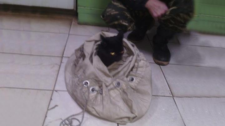 Екатеринбуржец проник на секретный завод, чтобы спасти застрявшего на сосне котика