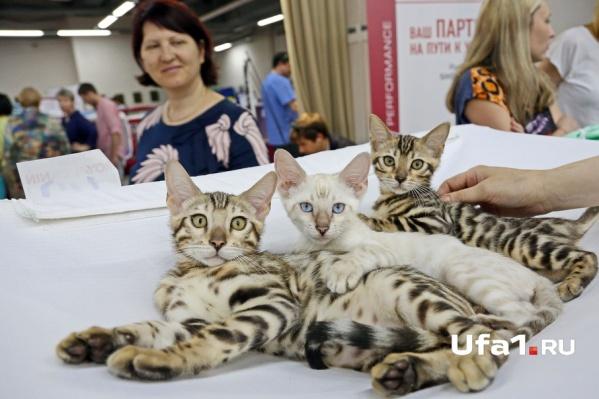 Многим моделям не помешало бы поучиться позированию у этих котят