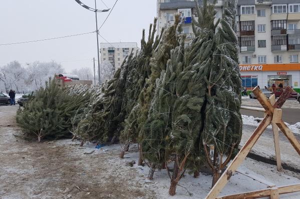 Ёлочные базары начали работу с 15 декабря по всему городу