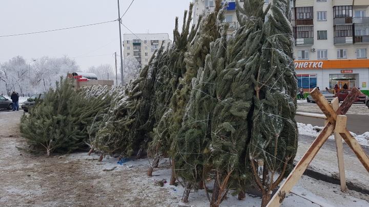 Где купить ёлку в Кургане: список точек продажи новогодних деревьев