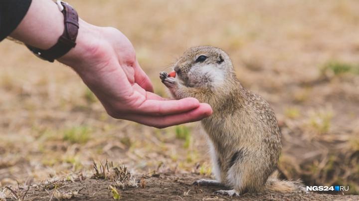 «Первые суслики накормлены»: фотоподборка любопытных проснувшихся животных