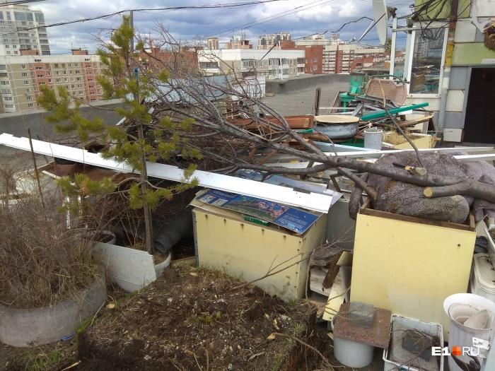 Сад на крыше появился 18 лет назад