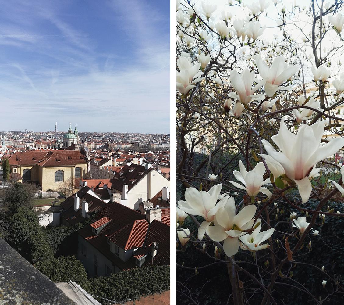 Одно из любимых мест Ильи в Праге — ботанический сад. Там есть винная, где делают вино из местного винограда