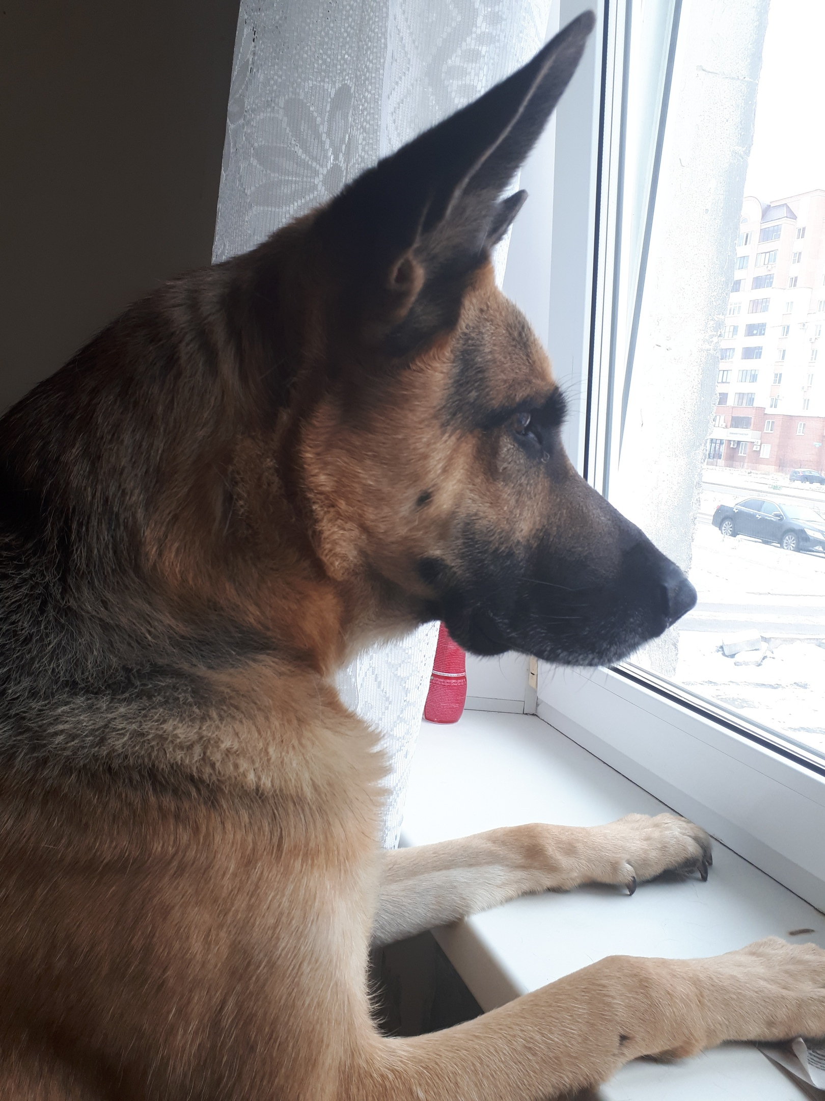 Овчарка Макс живет у Татьяны всего полгода. Женщина подобрала пса на улице