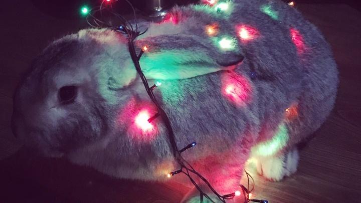 Кролик с гирляндой, модный Рич и чудо по имени Джесси: собираем фото домашних любимцев к Новому году