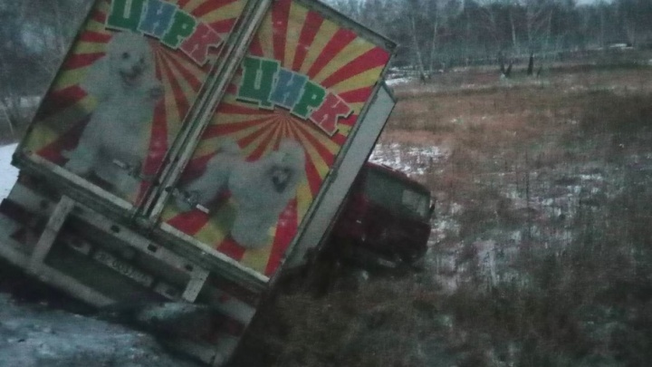 Цирк уехал: с дороги под Челябинском вылетел фургон с 22 дрессированными животными