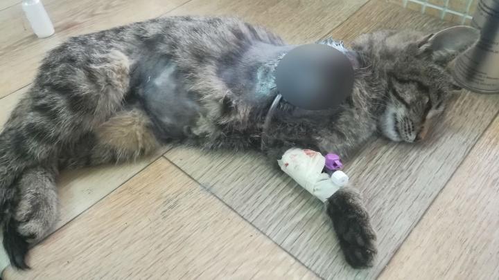 Лапку пришлось ампутировать: в Уфе нашли еще одного покалеченного котенка