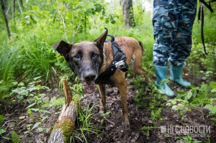 Cотрудники экстренных служб отыскали детей иихродителей, потерявшихся влесу вНовосибирской области