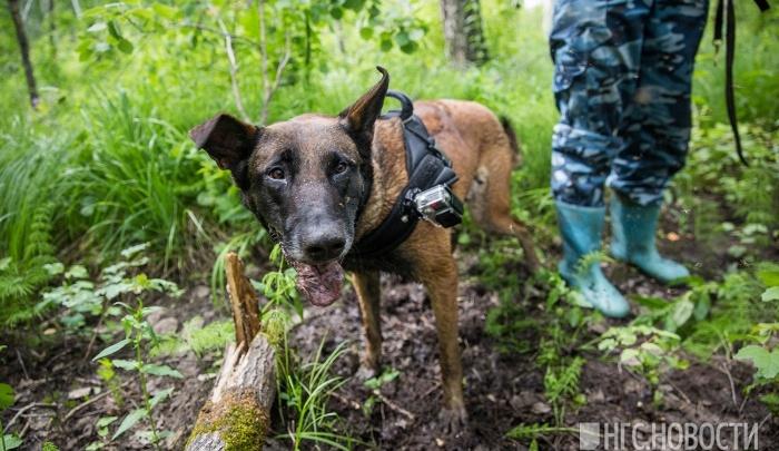 В лесу под Новосибирском заблудились дети