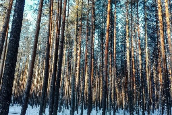 Мужчина незаконно поохотился в одном из кварталов Тарнянского участкового лесничества Шенкурского района